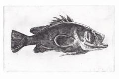 tumblrWreckfish